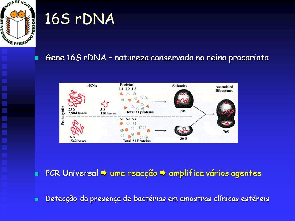16S rDNA Gene 16S rDNA – natureza conservada no reino procariota