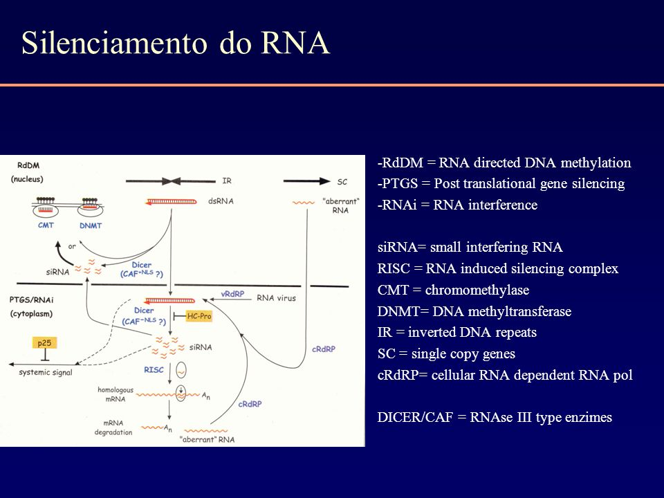 Silenciamento do RNA -RdDM = RNA directed DNA methylation