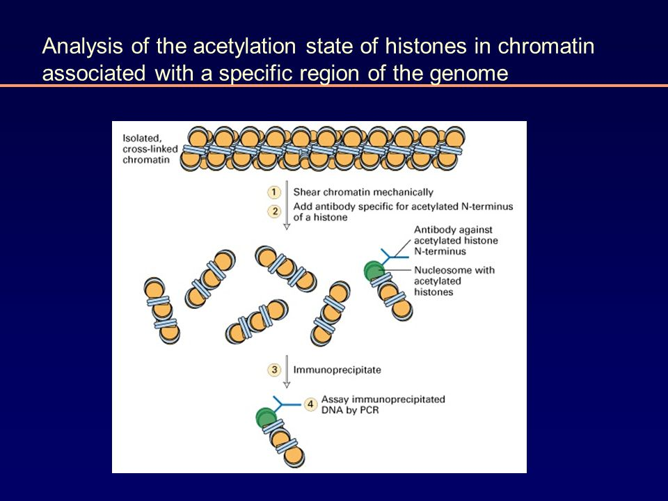Analysis of the acetylation state of histones in chromatin associated with a specific region of the genome