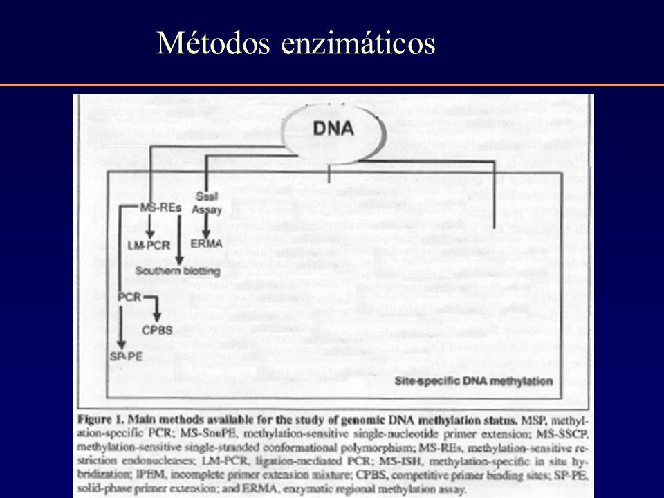 Métodos enzimáticos