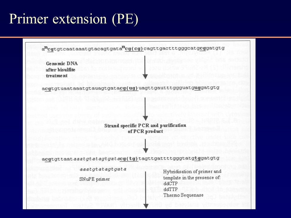 Primer extension (PE)