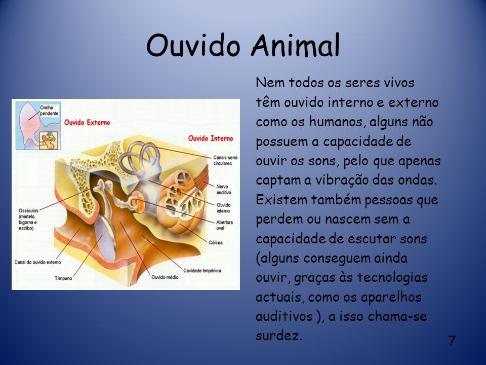 Ouvido Animal