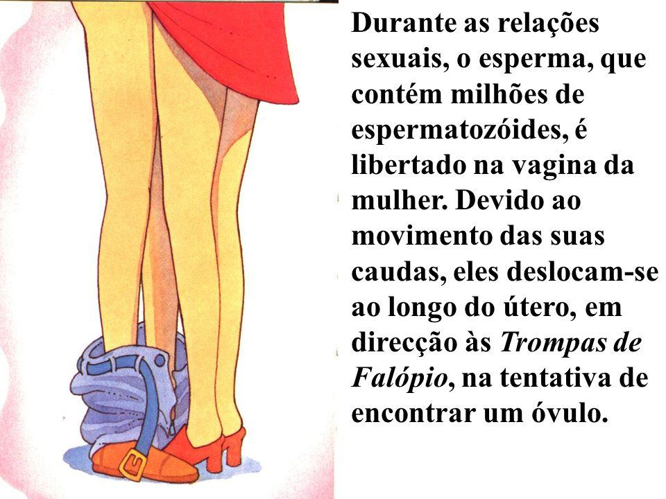 Durante as relações sexuais, o esperma, que contém milhões de espermatozóides, é libertado na vagina da mulher.