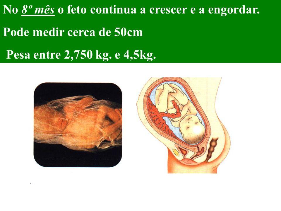 No 8º mês o feto continua a crescer e a engordar.