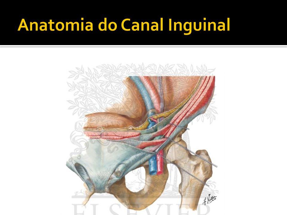 Encantador Anatomía Canal Inguinal Fotos - Imágenes de Anatomía ...