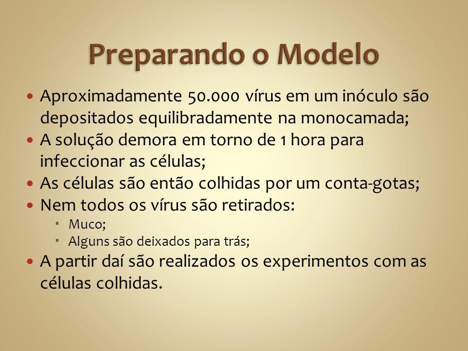 Preparando o ModeloAproximadamente 50.000 vírus em um inóculo são depositados equilibradamente na monocamada;