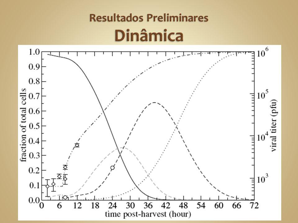 Resultados Preliminares Dinâmica