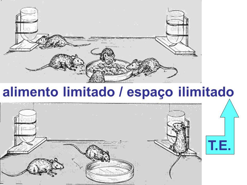 alimento limitado / espaço ilimitado