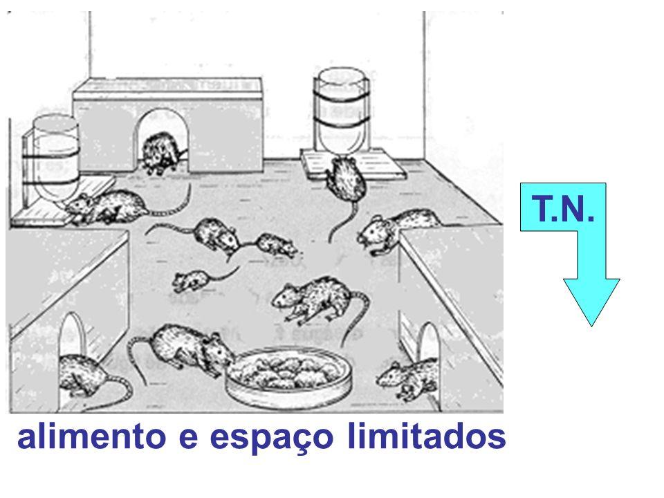 T.N. alimento e espaço limitados