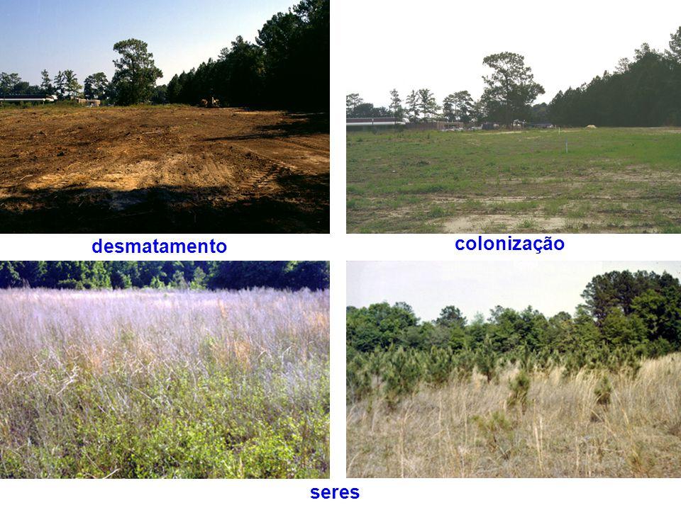 desmatamento colonização seres