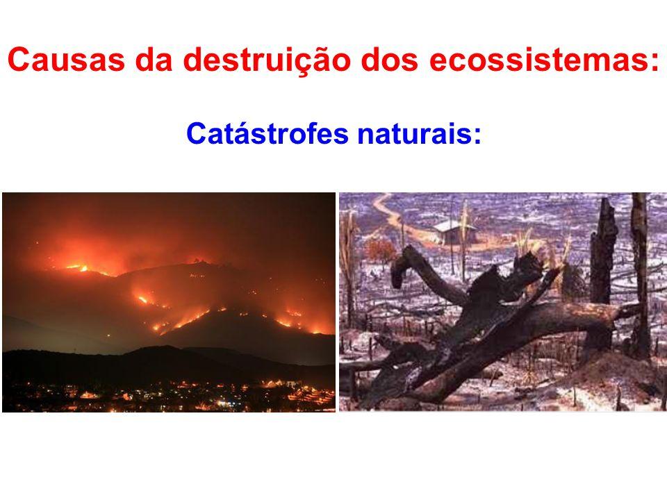 Catástrofes naturais: