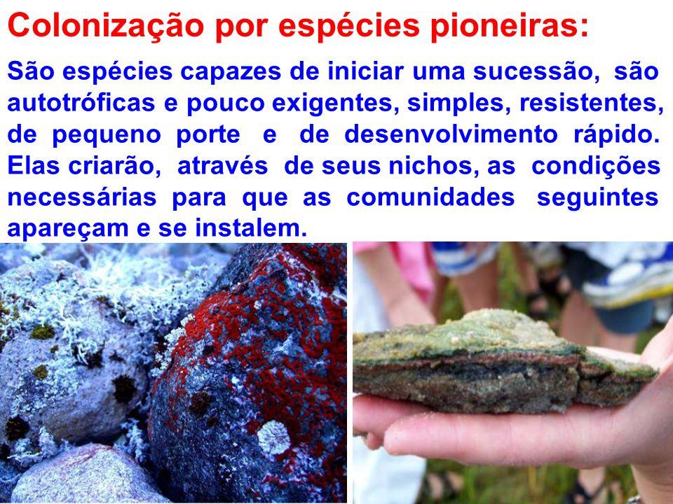 Colonização por espécies pioneiras: