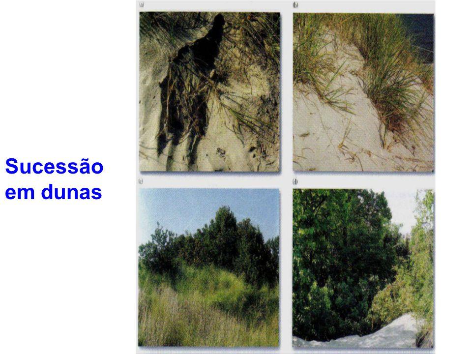 Sucessão em dunas