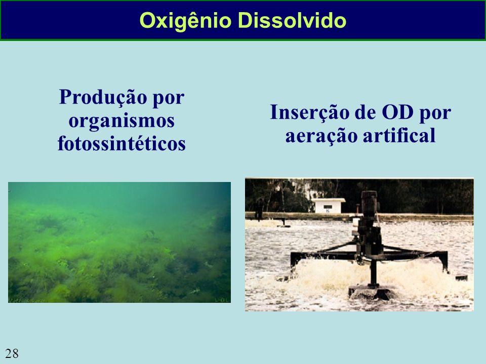 Produção por organismos fotossintéticos