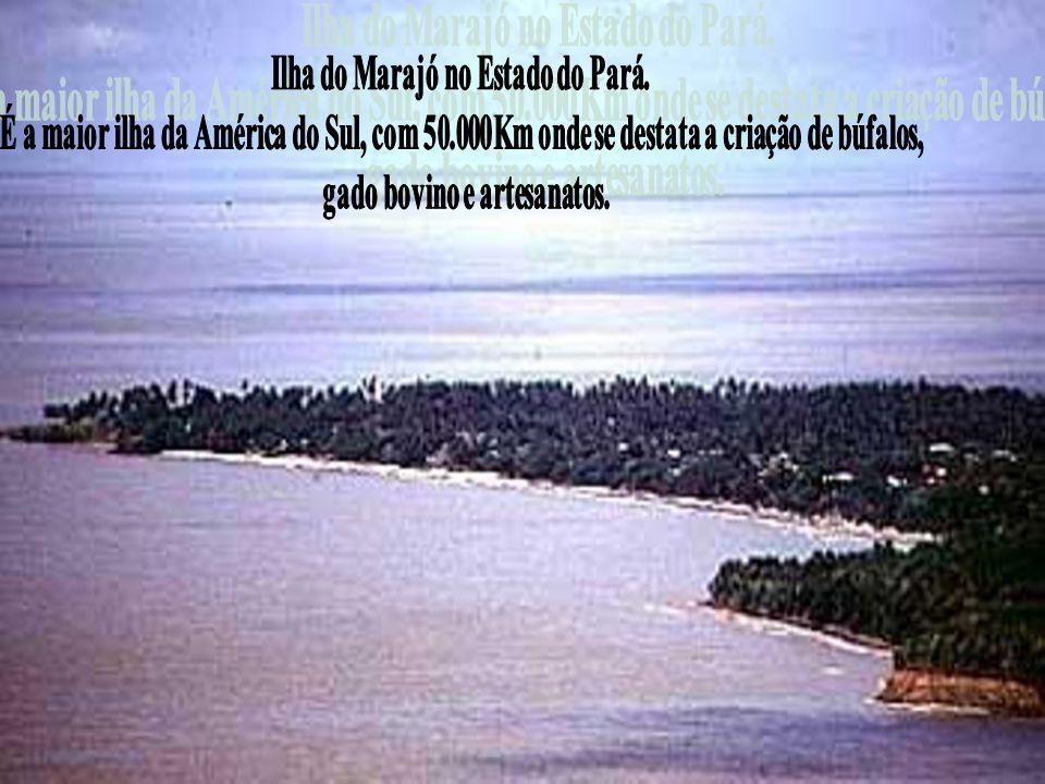 Ilha do Marajó no Estado do Pará. gado bovino e artesanatos.