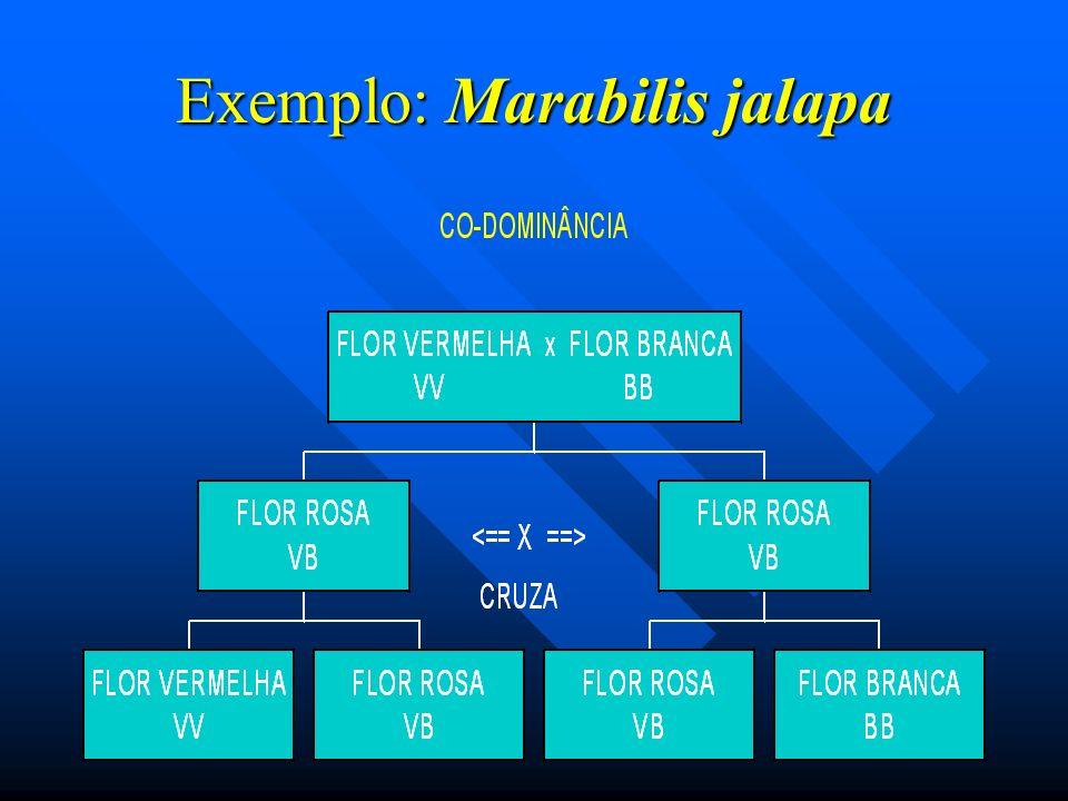 Exemplo: Marabilis jalapa