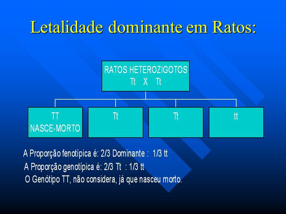 Letalidade dominante em Ratos: