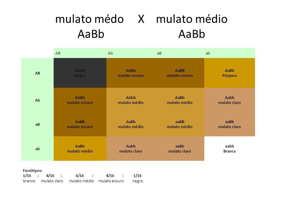 mulato médo X mulato médio AaBb AaBb