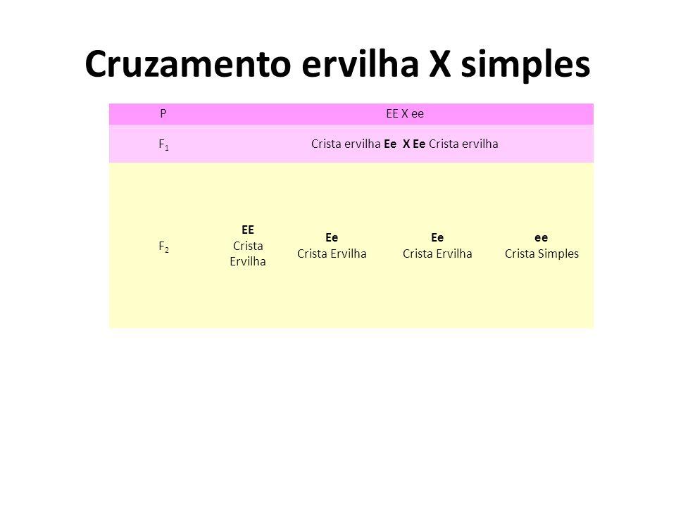 Cruzamento ervilha X simples