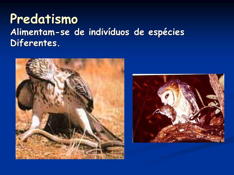 Predatismo Alimentam-se de indivíduos de espécies Diferentes.