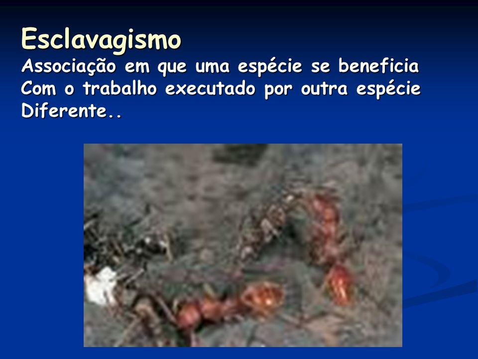 Esclavagismo Associação em que uma espécie se beneficia