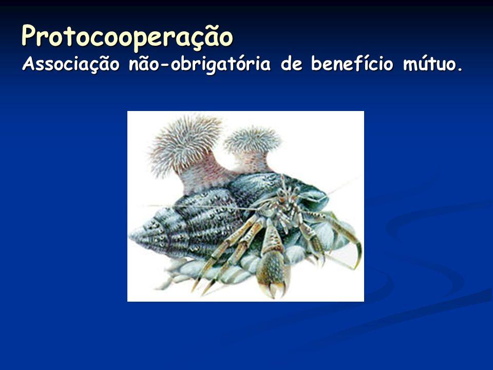 Protocooperação Associação não-obrigatória de benefício mútuo.