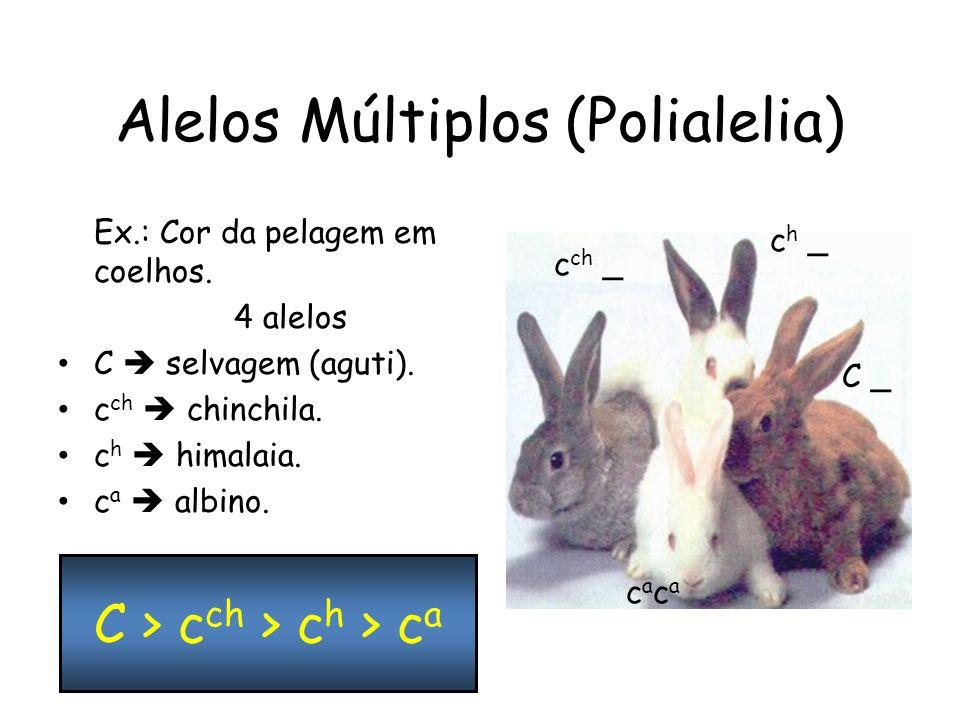 Alelos Múltiplos (Polialelia)