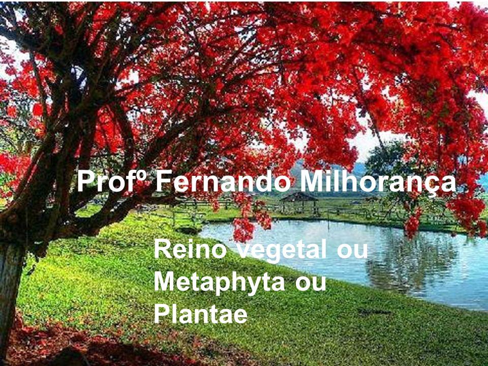 Profº Fernando Milhorança
