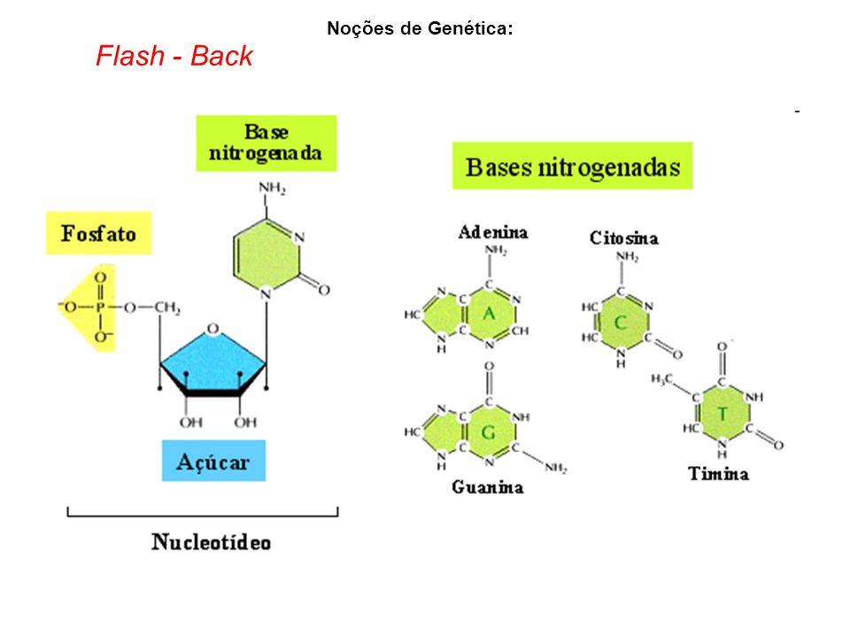 Noções de Genética: Flash - Back