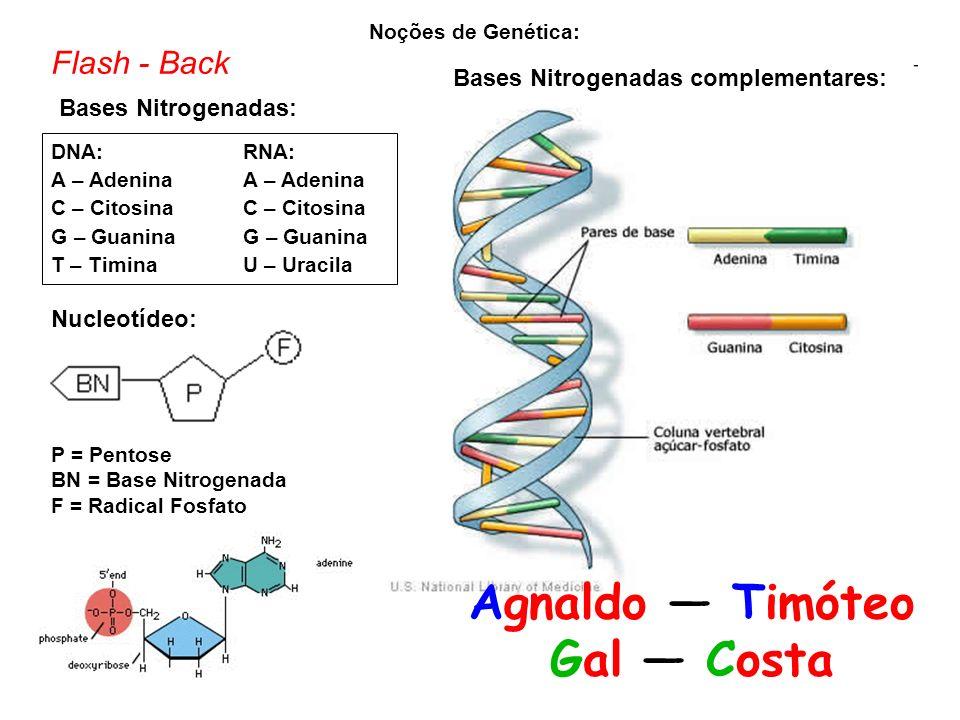 Bases Nitrogenadas complementares: