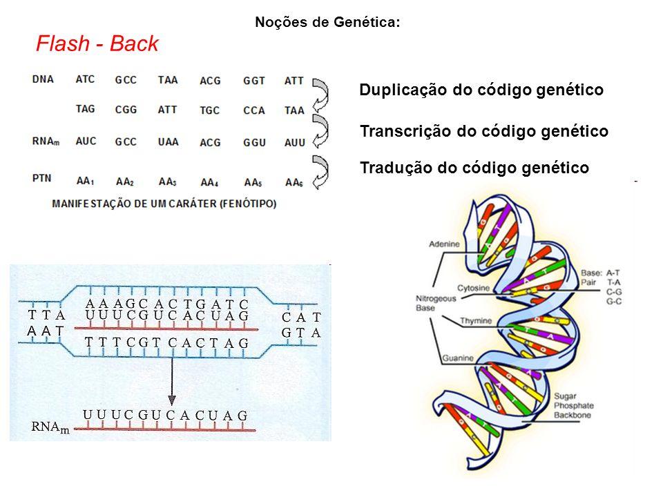 Flash - Back Duplicação do código genético