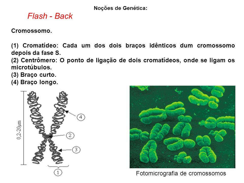 Flash - Back Cromossomo.