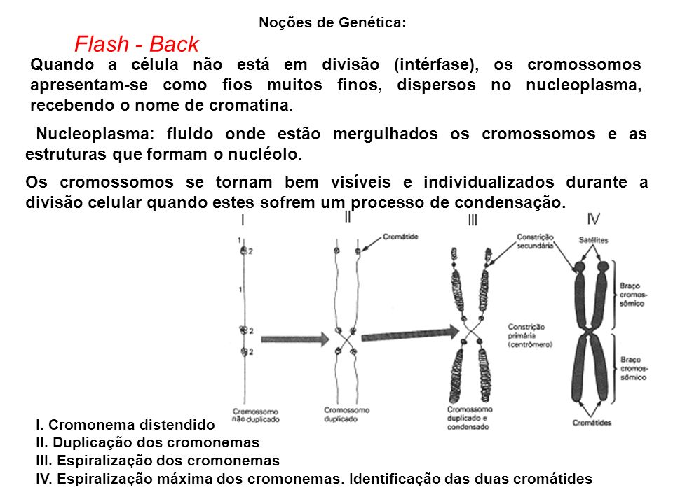 Noções de Genética: Flash - Back.