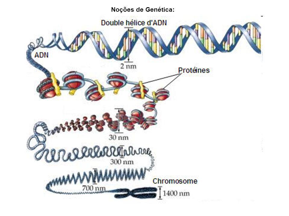 Noções de Genética: