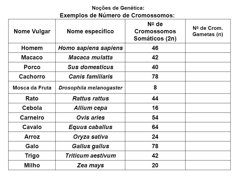 No de Cromossomos Somáticos (2n) Drosophila melanogaster