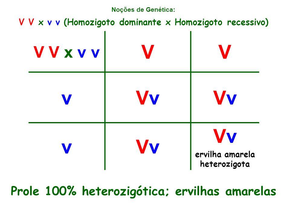 V v Vv V V x v v Prole 100% heterozigótica; ervilhas amarelas