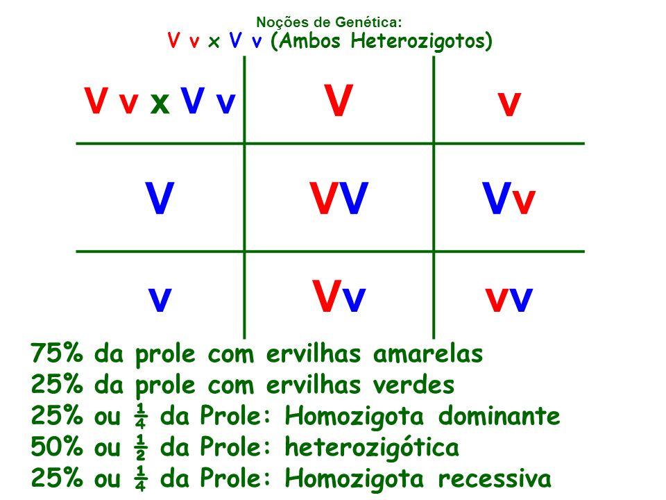 V v x V v (Ambos Heterozigotos)