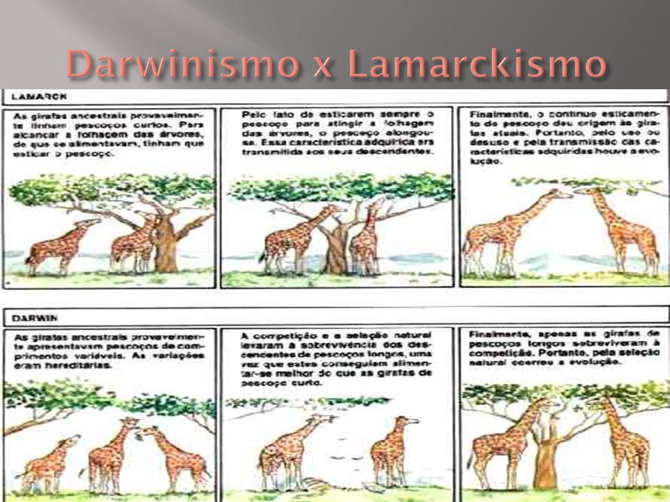 Darwinismo x Lamarckismo