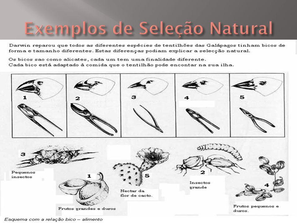 Exemplos de Seleção Natural