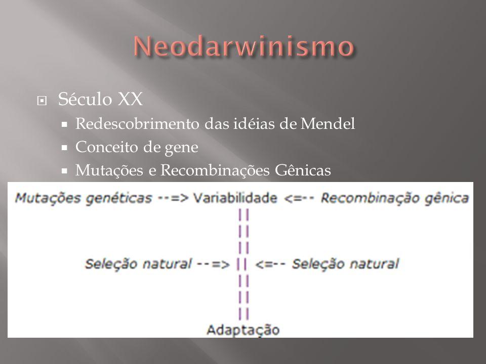 Neodarwinismo Século XX Redescobrimento das idéias de Mendel