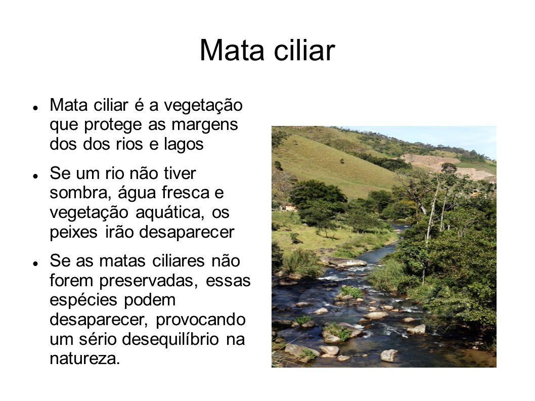Mata ciliar Mata ciliar é a vegetação que protege as margens dos dos rios e lagos.