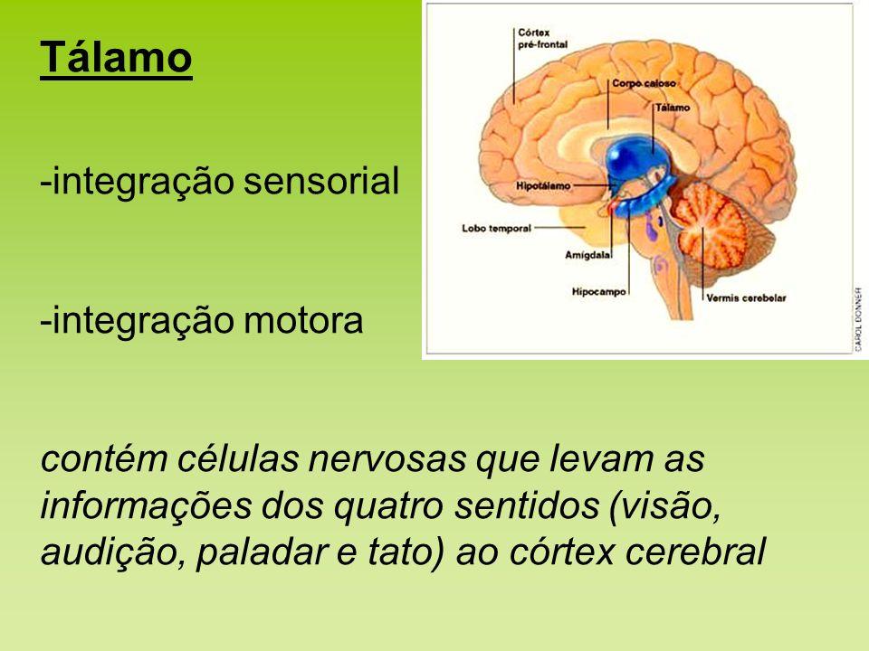 Tálamo -integração sensorial -integração motora