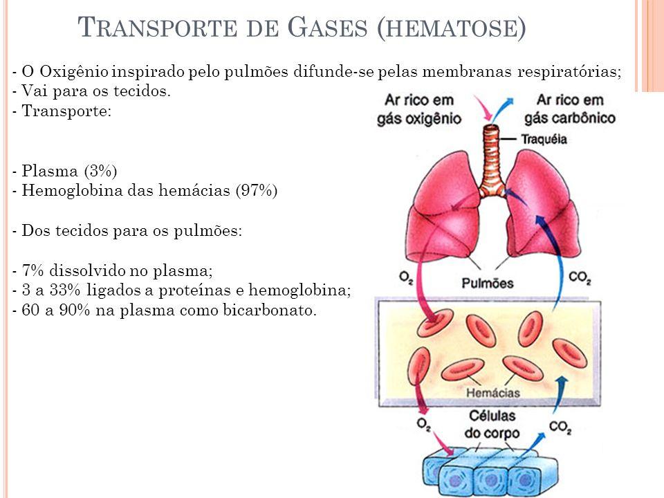 Transporte de Gases (hematose)