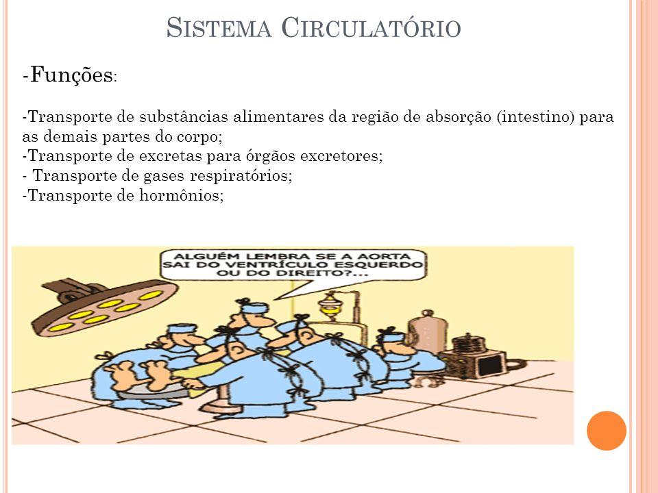 Sistema Circulatório Funções: