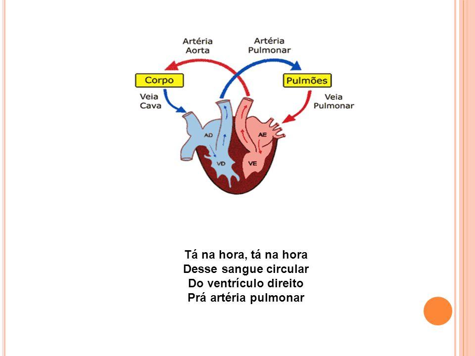 Tá na hora, tá na hora Desse sangue circular. Do ventrículo direito.