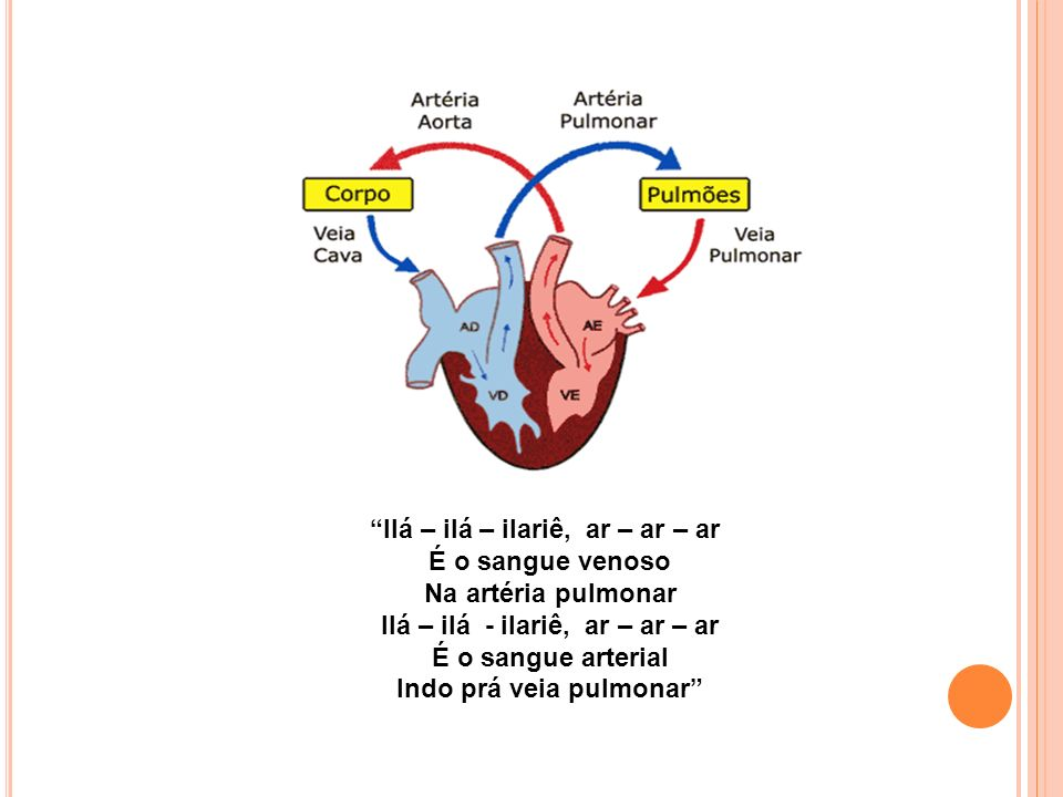 Indo prá veia pulmonar