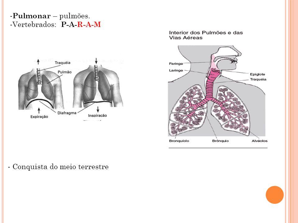 Pulmonar – pulmões. Vertebrados: P-A-R-A-M - Conquista do meio terrestre