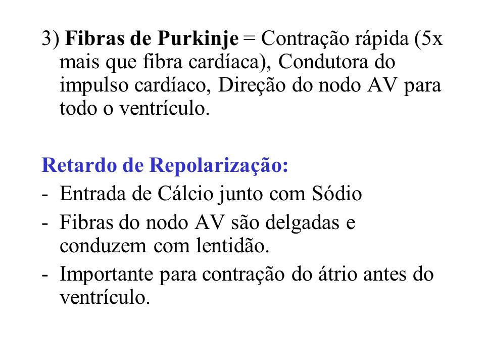 3) Fibras de Purkinje = Contração rápida (5x mais que fibra cardíaca), Condutora do impulso cardíaco, Direção do nodo AV para todo o ventrículo.