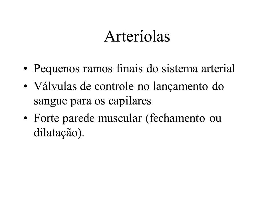 Arteríolas Pequenos ramos finais do sistema arterial