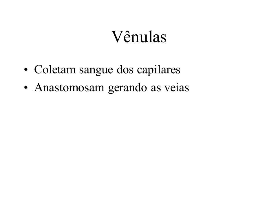 Vênulas Coletam sangue dos capilares Anastomosam gerando as veias